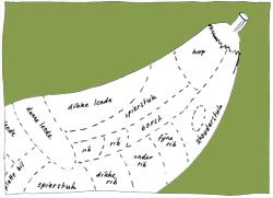 auberginekoe